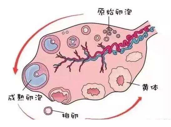 深圳龙华妇科医院哪家好子宫肌瘤怎么治